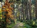 The Path (49751614).jpeg