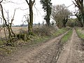 The Peddars Way from Hockham to Illington - geograph.org.uk - 1759441.jpg