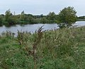 The River Trent - geograph.org.uk - 557432.jpg