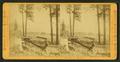 The shore of Lake Tahoe, by Muybridge, Eadweard, 1830-1904.png