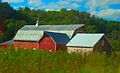 Three Red Barns - panoramio.jpg