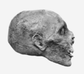 Thutmosis III mummy head profile.png