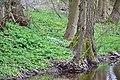 Thyra bei der Heimkehle - Blühender Uferbewuchs.jpg