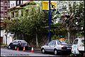 Tiempo de poda - Pruning season (5171672381).jpg