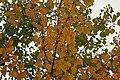 Tippen - early autumn - panoramio.jpg