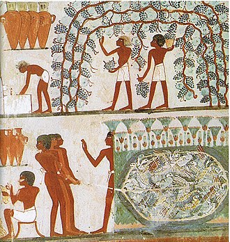 Dried fruit - Temple of Nahkt, Egypt. Harvesting grapes, many of which would be dried into raisins.