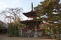 Tonanin Yoshino Nara02n4272.jpg