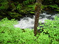 Tongass National Forest 1.jpg