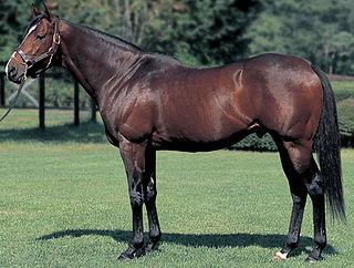 Tony Bin Thoroughbred racehorse