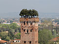 Torre Guinigi, Guinigi Tower, Lucca.jpg