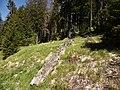 Totholz am Großen Arber.jpg