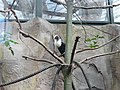 Toucan (2363884578).jpg