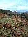 Towards Glenshalloch Wood - geograph.org.uk - 631606.jpg