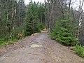 Trail at Silberteich 03.jpg