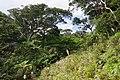 Trail of Mount Omoto 201912 06.jpg