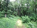 Trebisov Andrassyovsky kastiel (park)-31.JPG