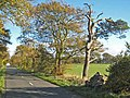 Tree-lined road between Little Bavington and Bolam - geograph.org.uk - 271470.jpg