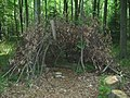 Tree Shelter in Meenfield Woods - geograph.org.uk - 1333165.jpg