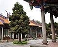 Tree in Confucian Temple.jpg