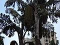 Tree in a park.JPG