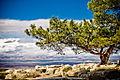 Tree on a mountain - from monastry of Semen Stolbnik near Aleppo - Syria.jpg