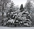 Trees (5277354919).jpg