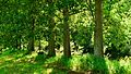 Trees At The Enz - panoramio (1).jpg