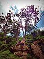 Trees on rocky hills.jpg