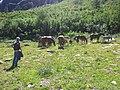 Tremorgio - panoramio (4).jpg