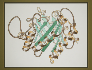 Structure - Ribbon schematic of the 3D structure of the protein triosephosphate isomerase. The brown spirals are α-helices and the green arrows are β strands, the components of β-pleated sheets.