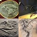 Troodontidae.jpg