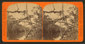 Tropical scenery, from Robert N. Dennis collection of stereoscopic views.png