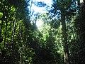Tropska prašuma.jpg