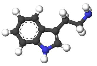 Tryptamine - Image: Tryptamine 3d sticks