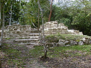 El Pilar - Tzunu'un, a Maya house site surrounded by forest vegetation at El Pilar