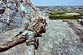 US Army Sniper in Afghanistan 110725-A-6866Y-780c.jpg