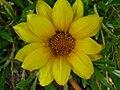 Unidentified flower in parking lot.jpg