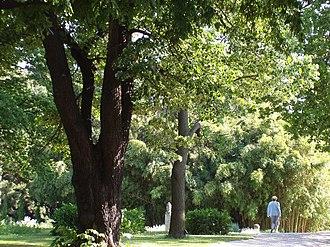 Botanical Garden of the University of Vienna - The Botanical Garden of the University of Vienna