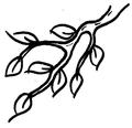 Větev.png