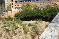 VIEW , ®'s - DiDi - RM - Ð 6K - ┼ , MADRID PARQUE de PEÑUELAS JARDÍN - panoramio (53).jpg