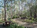 Venman Bushland National Park picnic area.jpg