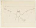 Vespertilio emarginatus - 1700-1880 - Print - Iconographia Zoologica - Special Collections University of Amsterdam - UBA01 IZ20800119.tif