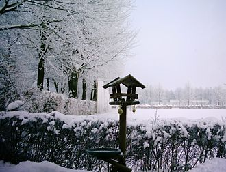 Bird feeding - Bird feeding in winter