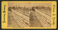 Viaduct, foot of Randolph Stret, from Robert N. Dennis collection of stereoscopic views.png