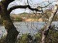 View across fishing lake - geograph.org.uk - 1203451.jpg