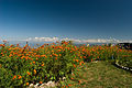 View of Himalayas from the top of Mukteshwar.jpg