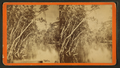 View of the Oklawaha River, Florida, from Robert N. Dennis collection of stereoscopic views 3.png