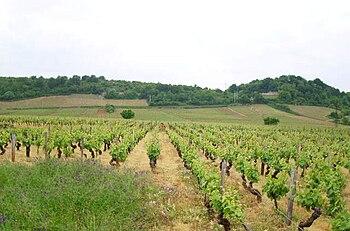 Vignoble de mercurey 10.JPG