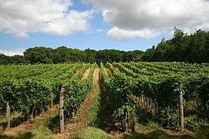 Wine from the United Kingdom - A vineyard in Wyken.