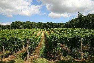 Wine from the United Kingdom - A vineyard in Wyken
